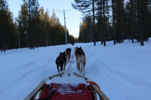 Lappland Februar 2015 149